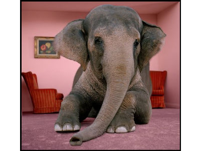 ecards-elephant-room11